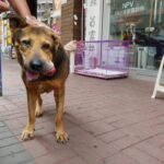 Senior shelter doggie, lump growing speedly in weeks and blood dropping out