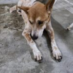 Shelter doggie lost appitis for day