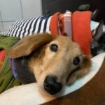 Problems encountered in caring for old dogs - What's your choice?