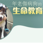 Life Education for Old Injured Dogs